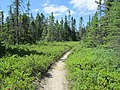 Major Kollock Trail, Kouchibouguac National Park, NB (41553937980).jpg