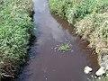 Manure spill - discolored stream - USGS 2009.jpg