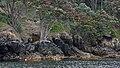 Mayor Island Track, Mayor Island, New Zealand - panoramio (4).jpg