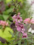 Maypurpleflower.jpg