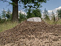 Mierenheuvel op het Mierenheuvel.jpg