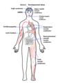 Mitochondrial complex I deficiency major symptoms.png