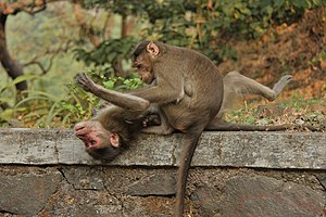 Monkey - Monkeys often groom socially.