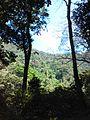 Montaña Exhuberante.jpg