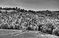 Montericco - Albinea (RE) Italy - May 29, 2011 - panoramio.jpg