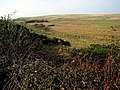 Moorland at Mossgavel - geograph.org.uk - 331958.jpg