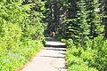 Mount Rainier - Paradise - Dead Horse Creek Trail north from Waterfall Trail - August 2014 - 01.jpg