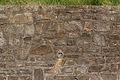 Mur de contrefort, Île aux Moines, Morbihan, France.jpg
