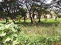 Museu Agromen de Tratores e Implementos Agrícolas - Orlândia - panoramio.jpg