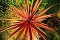 My cordyline pot plant.jpg