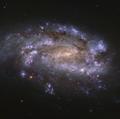 NGC 1559.png