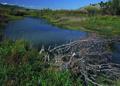 NRCSMT01041 - Montana (4931)(NRCS Photo Gallery).tif
