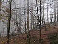 Namakabrud, Mazandaran Province, Iran - panoramio (5).jpg