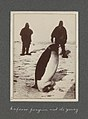 National Antarctic Expedition, 1901-1903 RMG S1048-020.jpg