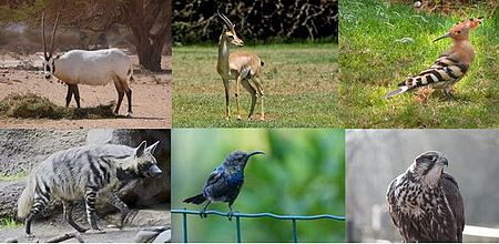 National animals of the Levant.JPG