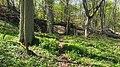 Nationalpark Unteres Odertal, Stolpe, Oder, Koordinaten 52.977273,14.109209.jpg