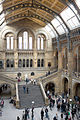Natural History Museum Central Hall.jpg