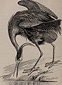 Natural history of animals; (1895) (14802485523).jpg