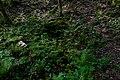 Naturdenkmal Hessen Drachenbrünnchen 1.jpg
