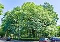 Naturdenkmal Landwasser (Freiburg im Breisgau) jm65101.jpg