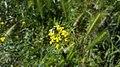 Nature In Hrazdan Gorge 22.jpg