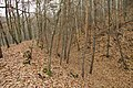 Nature reserve Šance in autumn 2012 (15).JPG