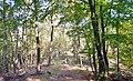 Naturpark und Biosphärenreservat Pfälzerwald - panoramio (16).jpg