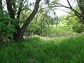 Naturschutzgebiet Heuckenlock 21.05.2014 Phase 117.JPG