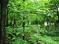 Nenmara road - panoramio.jpg