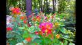 Nice Flowers.png