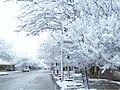 Nieve LaCarlota.jpg
