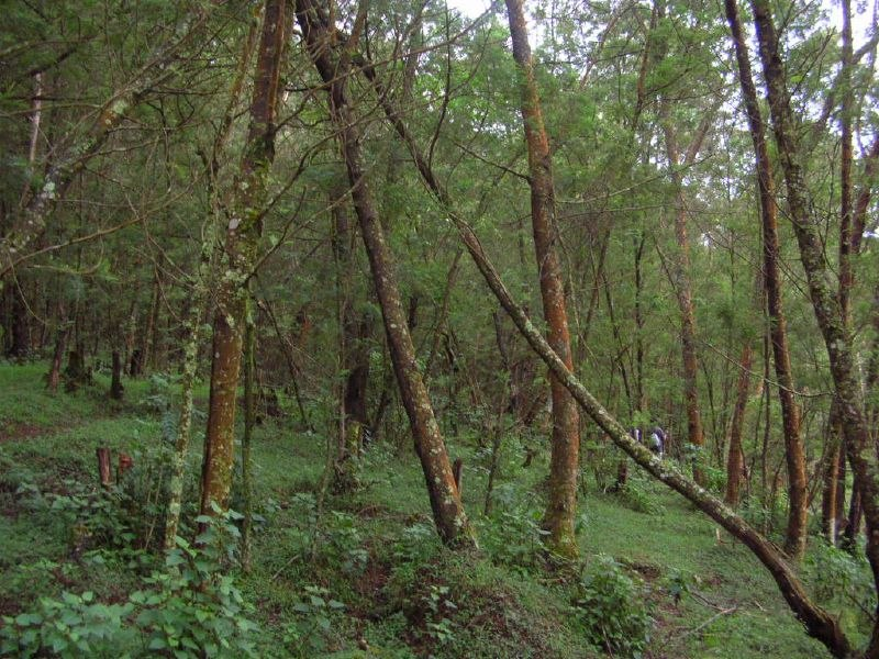 Nilgiri forest