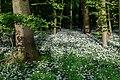 Nordkirchen, Naturschutzgebiet Ichterloh -- 2018 -- 2323.jpg