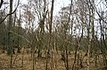 North Western Broadwood, Northmuir, by Kirriemuir. - geograph.org.uk - 118285.jpg