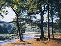 Northern edge of Grass Wood - geograph.org.uk - 1154611.jpg