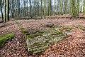 Nottuln, Lager Herbstwald -- 2016 -- 1481.jpg