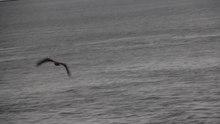 File:NuukSeaEagle.ogv
