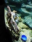 Octopus-vulgaris-1.jpg