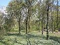 Odessa Main Botanical garden 02.JPG