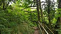 Offaly way walk near the Silver River, Cadamstown Co. Offaly. 2.jpg