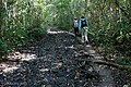 On the Trail to Tintal - (greg-willis.com) - panoramio.jpg