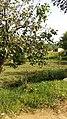 Oranges - panoramio.jpg
