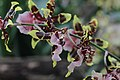 Orchid (33199648962).jpg
