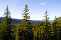 Oregon Route 242 Scenic Vista.jpg