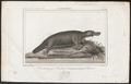 Ornithorhynchus paradoxus - 1838 - Print - Iconographia Zoologica - Special Collections University of Amsterdam - UBA01 IZ20300178.tif