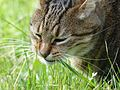 Oslo, brown tabby female cat, 11 years (2).jpg