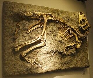 <i>Othnielosaurus</i> genus of reptiles (fossil)