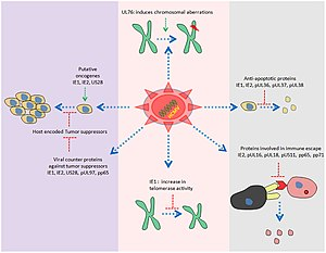Overview of diverse HCMV proteome involved in modulation of host cell controlled growth