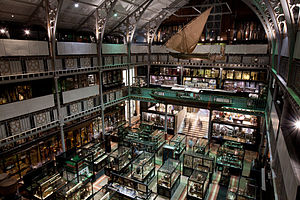 Pitt Rivers Museum - Image: Oxford Pitt Rivers Museum 0269
