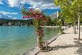 Pörtschach Johannes-Brahms-Promenade Kletterrosen 11062020 9148.jpg